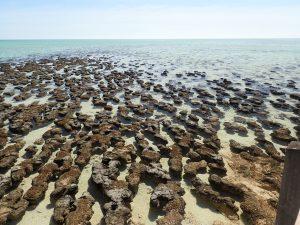Stromatolites, Hamelin Pool, WA