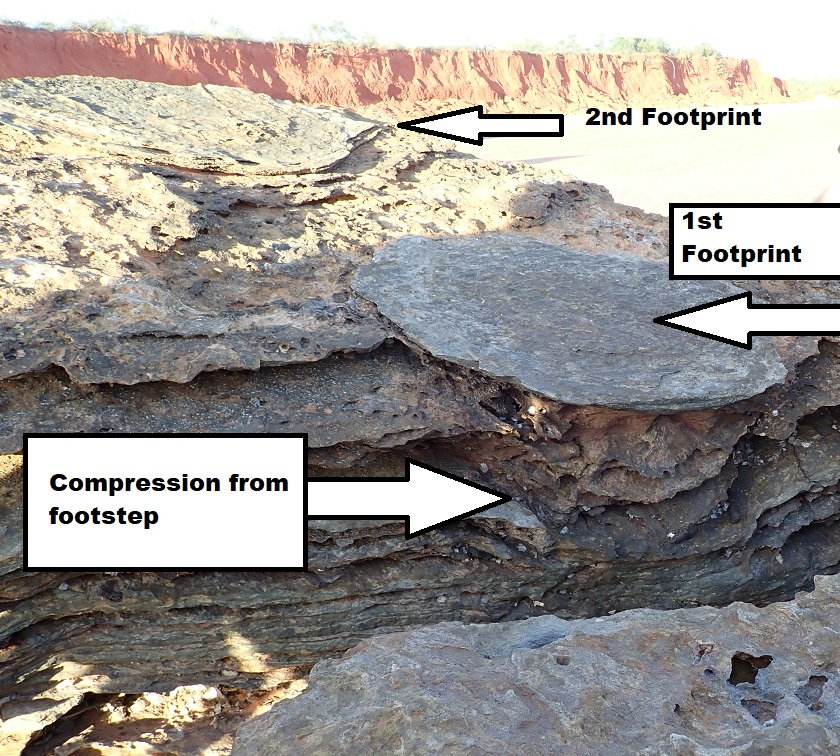You can see the compression of the 'soil' layers under this dinosaur footprint.