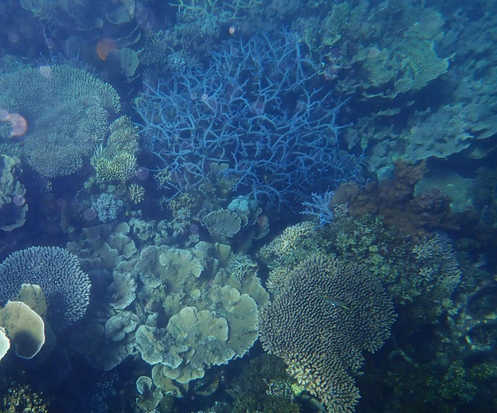 Coral Reef Western Australia