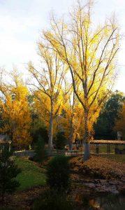 Autumnal Bridgewater